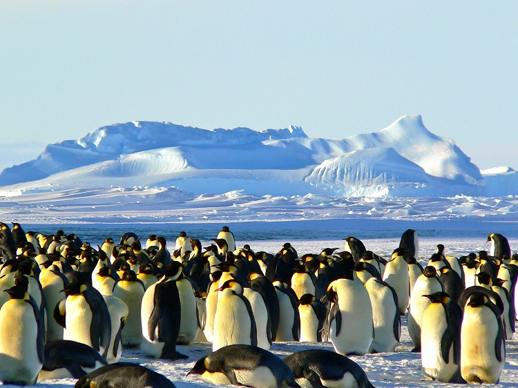 Antarctica-Vacation-Packages-2
